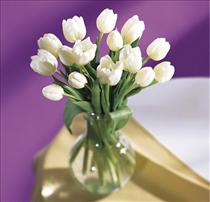 Photo of White Tulips Vased