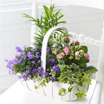 Photo of Arrangement of plants