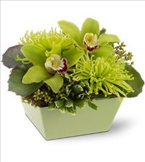 Photo of Go Green Orchids
