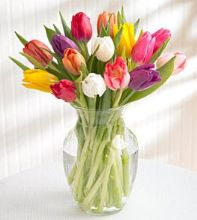 Photo of Springtime Tulips