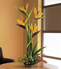 Photo of Bird of Paradise plant