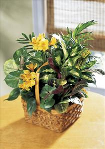 Photo of Sunshine Planter Plants Flower