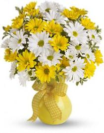 Photo of Daisies in a vase
