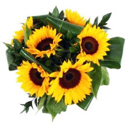 Six, Nine or Twelve Sun Flowers Gift Wrapped
