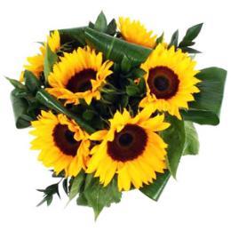 Six, Nine or Twelve Sun Flowers Gift Wrapped