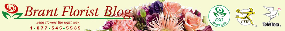 Brant Florist Blog header image
