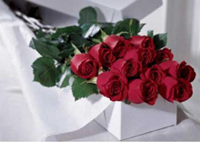 Premium Roses