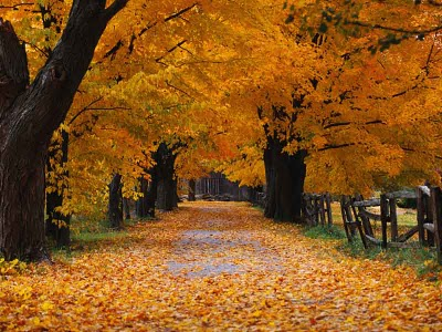 Beautiful Fall Walk