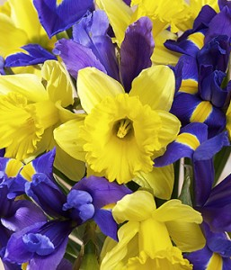 product_flowers_iris_and_daffodils_roll1