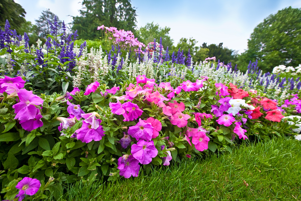 Photo of Garden Flowers