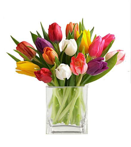 Mixed Tulips With Cube Vase