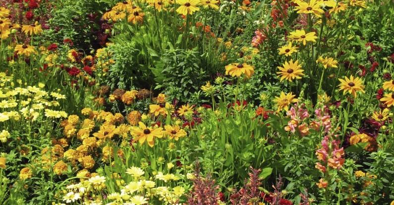 Spring/Summer Garden Flowers