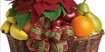 poinsettia Christmas plant gift basket