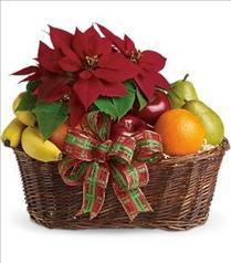 poinsettia Christmas plant gift basket