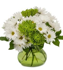 St Patrick's Day Daisies by Brant Florist