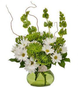 Brant Florist Spring Flowers Daisies