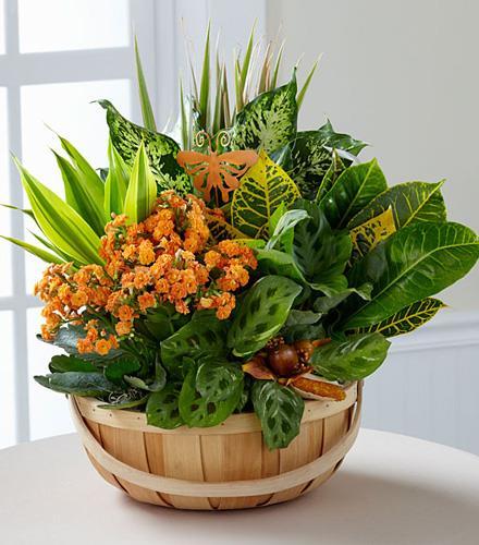 Plants Thanksgiving