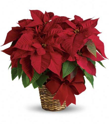 Festive Christmas Flowers