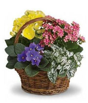Photo of an Easter Plant Basket