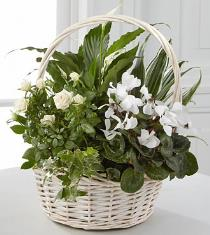 Photo of Perfect Peace Basket Dish Garden Mixed Plants - PG13