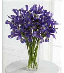 Photo of  Iris Riches in  Vase Advance Order - B26-4392