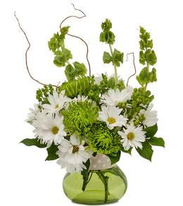 Photo of BF1187/TMF14-221 (More flowers)