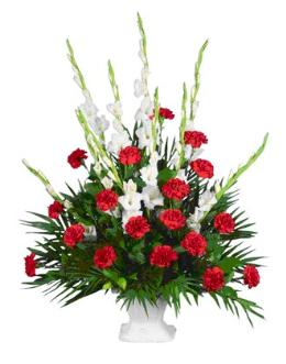 Photo of Gladioli or Snaps Carnation Tribute - YY11