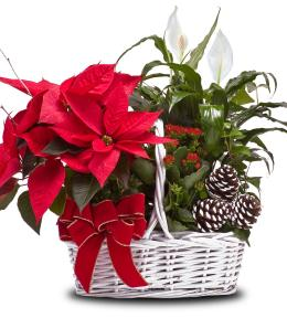 Photo of Poinsettia Garden Basket C1214  - C1214