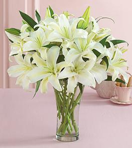 Photo of BF2006/FFL1d (More lilies)