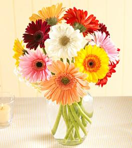 Photo of Gerbera Daisy Vased  - FFGD