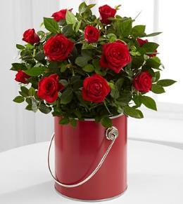 Photo of BF2137/PR95 (Red Mini Rose)