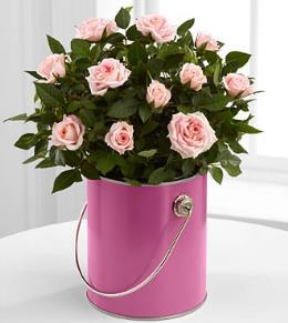 Photo of BF2142/PR96 (Pink Mini Rose)