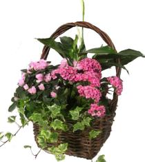 Photo of Blooming Plant Basket - P931