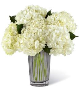 Photo of Ivory White Hydrangea in Vase 16M10 - 16-M10