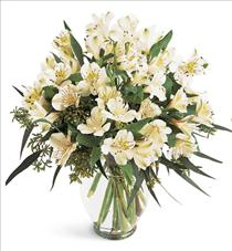 Photo of Elegant Alstroemeria Vased Color Choice  - B1-3700