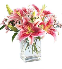 Photo of Pink Star Gazer Lilies in Vase  - B1-3701