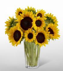 Photo of Golden Sunflower Bouquet in Vase - 16-F7