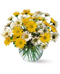 Photo of Dashing Daisies Flower in Vase - TF23-3