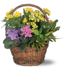 Photo of Petite European Basket of Plants - TF127-2