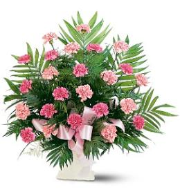 Photo of Classic Carnation Arrangement Color Choice - TF198-3
