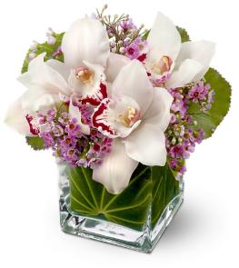 Photo of Lovely Orchids   - TFWEB144