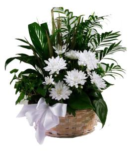 Photo of BF5411/S36-4227d (More Plants Larger Basket)