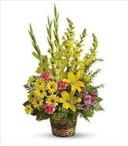 Photo of BF6276/T218-4DX (More flowers)