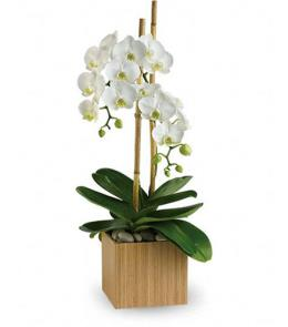 Photo of Teleflora's Opulent Orchids - T98-2