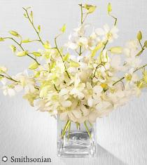 Photo of Smithsonian White Whispers Dendrobium Orchid Bouquet - SM23
