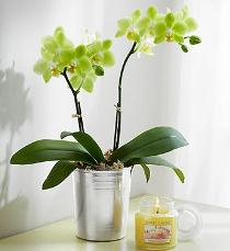 Photo of Orchid Plant - 800ORPL