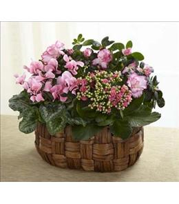 Photo of The FTD Pink Assortment - C23-4887
