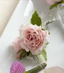 Photo of The FTD Pink Spray Rose Boutonniere - D12-4664