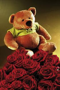 Photo of 7 Red Roses and Teddy Bear - IC-582
