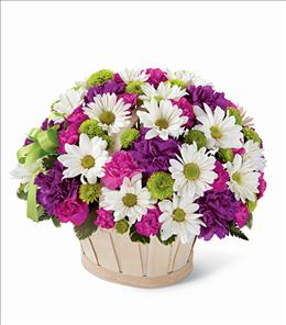 Photo of BF5536/N22-4329p (Premium Largest Most Flowers)